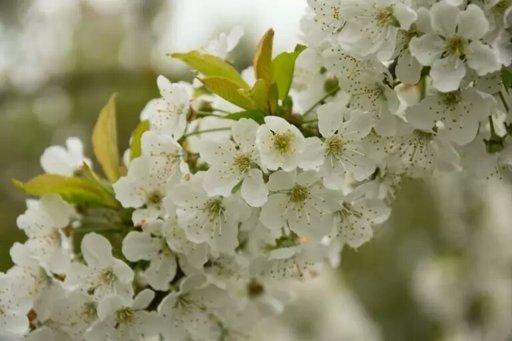 Las 10 Flores Mas Bellas Del Mundo Hetalia Amino