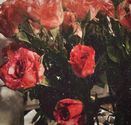 juniper rose xx