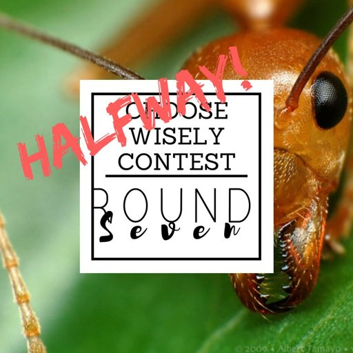 Choose Wisely 2 Round 7 The Hunger Games Amino