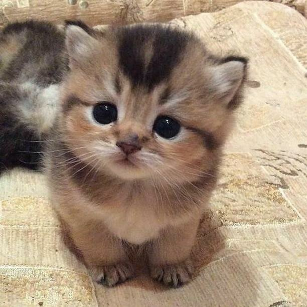 Kitten - (Very Small Prinxiety)   Thomas Sanders Fans Amino
