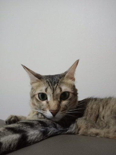 Nicknames for my cats | Cats Amino