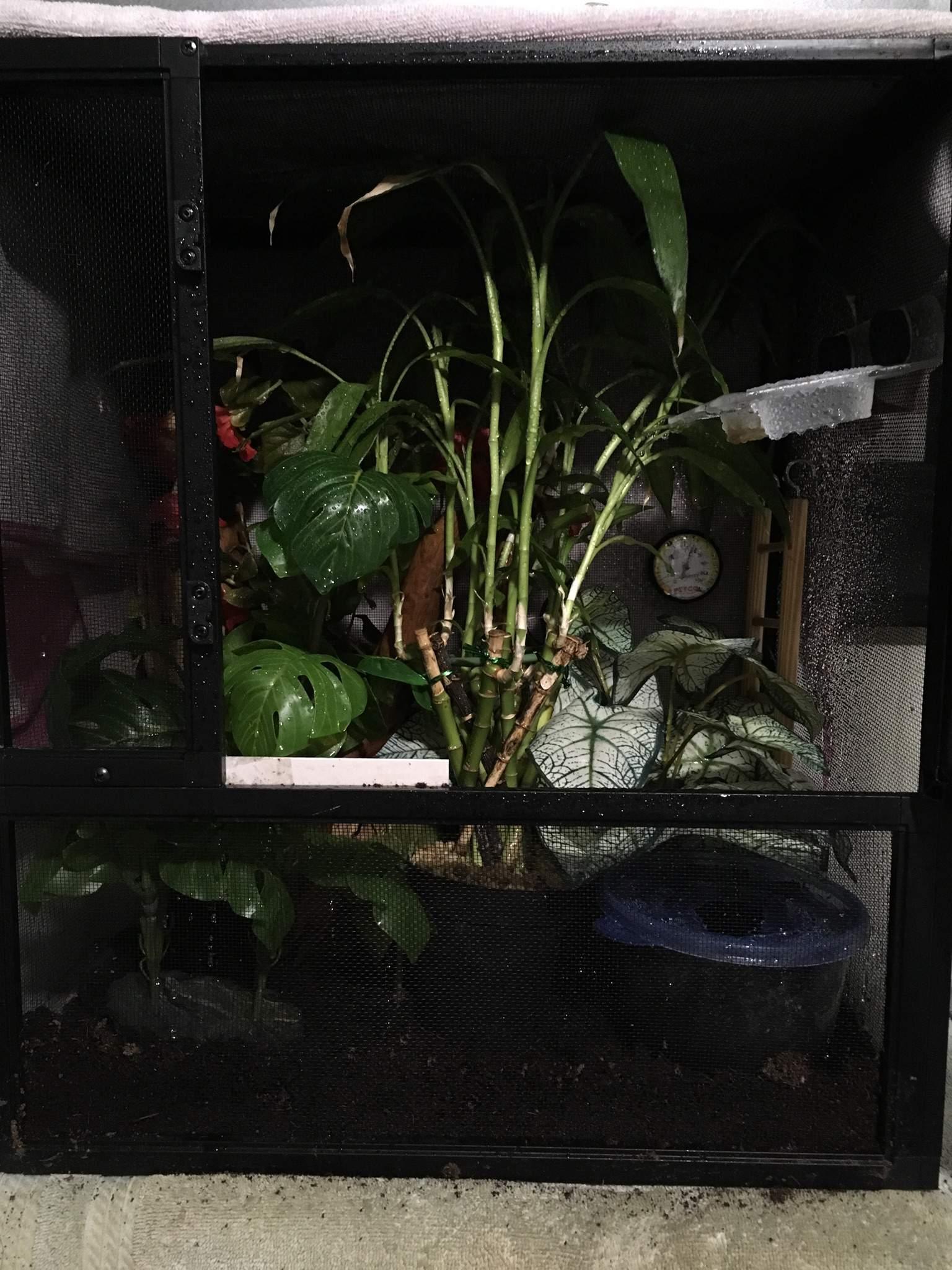 Screen Enclosures For Crested Geckos Reptiles Amino