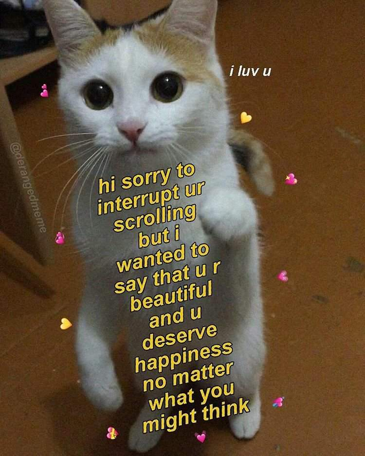 (Mainly) wholesome cat memes coz i love n'yall | Furry Amino