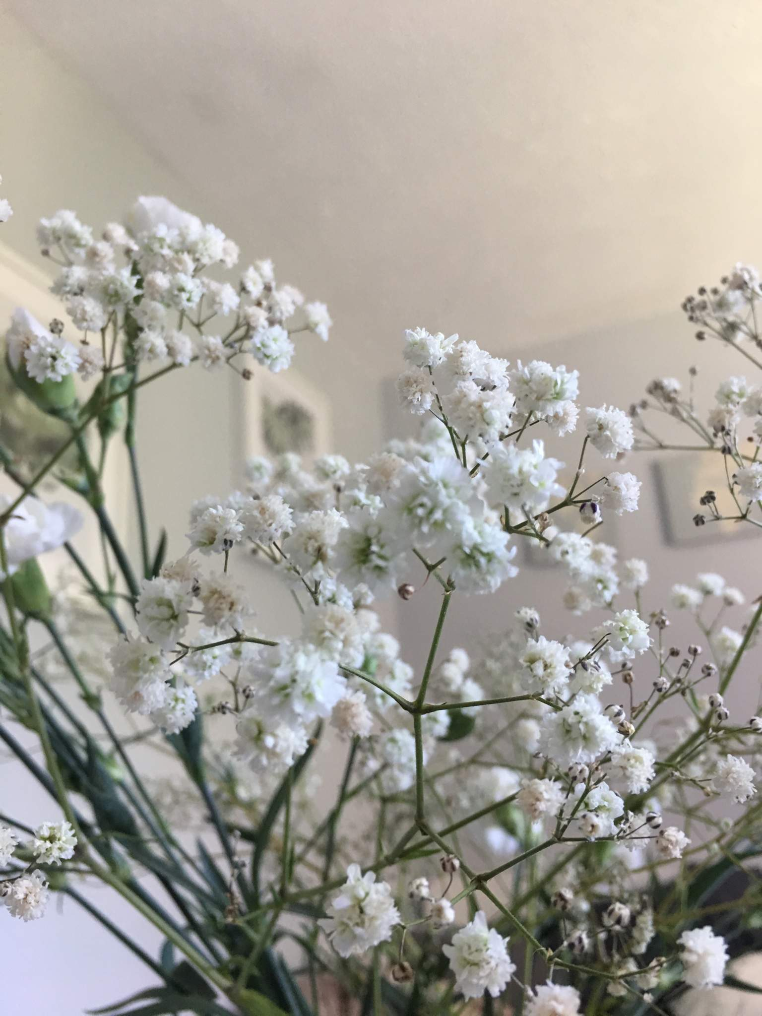 Baby S Breath Wiki The Witches Circle Amino