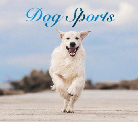 top dog sports
