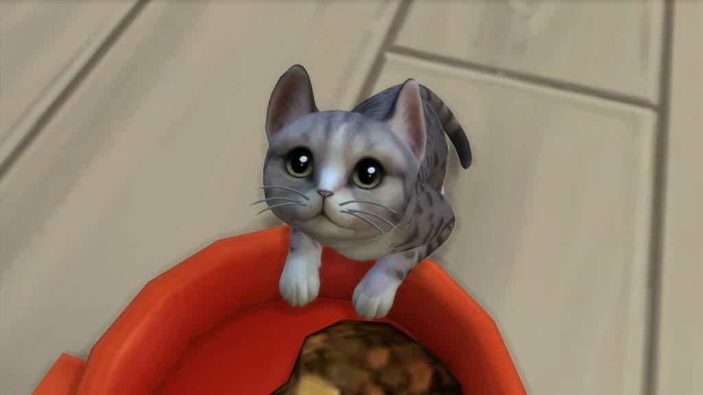 Sims blog *Cool* Fb975e4fb5d5560b883d90e6cb9cb74cca00f11er1-1600-900v2_hq