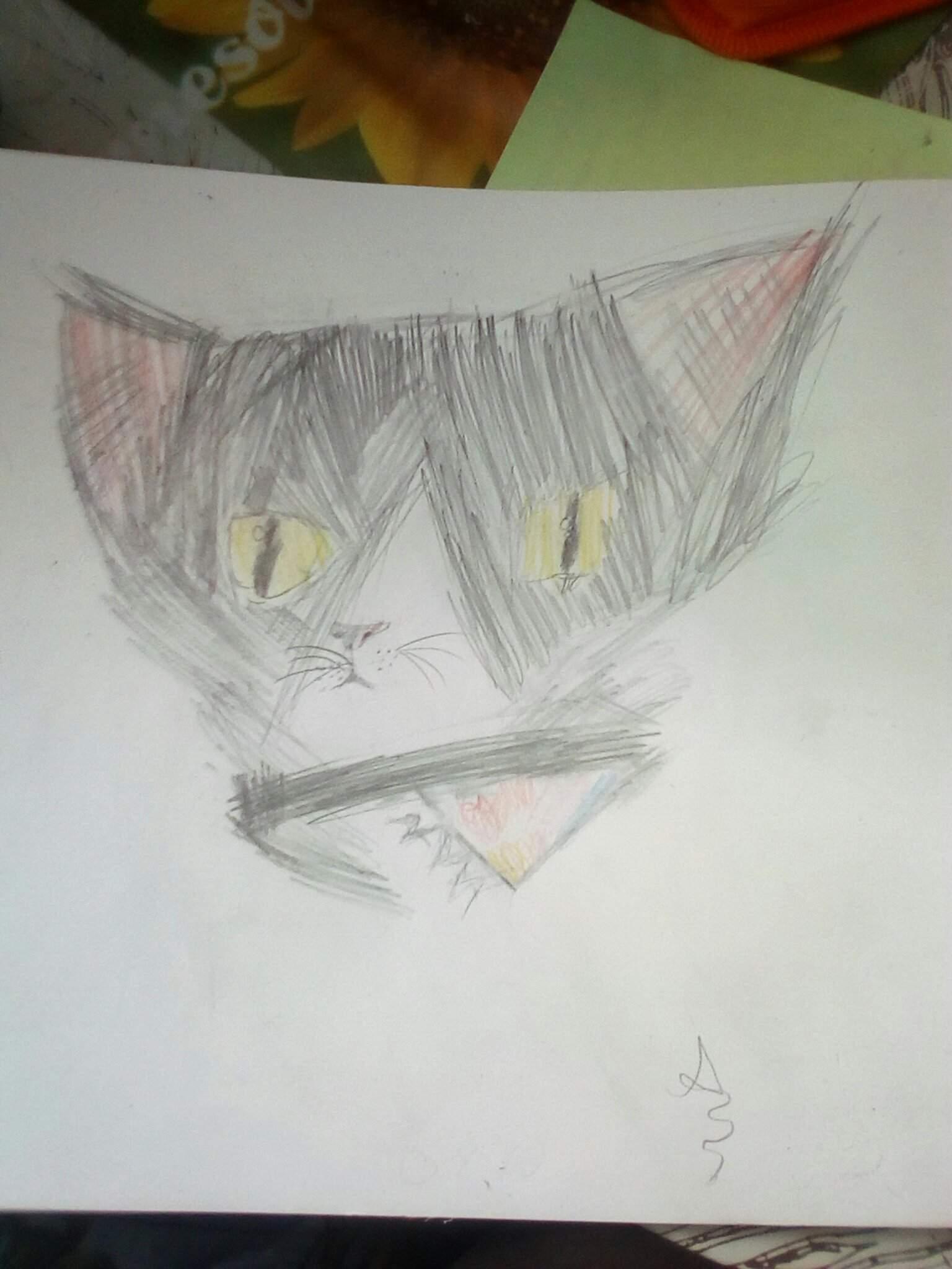 кот #киса #моя | ЮПЕТ | 2048x1536