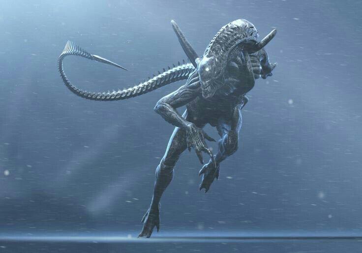 Xenomorph OC   Wiki   Alien Versus Predator Universe Amino