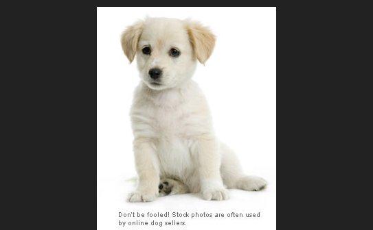 buy pet online