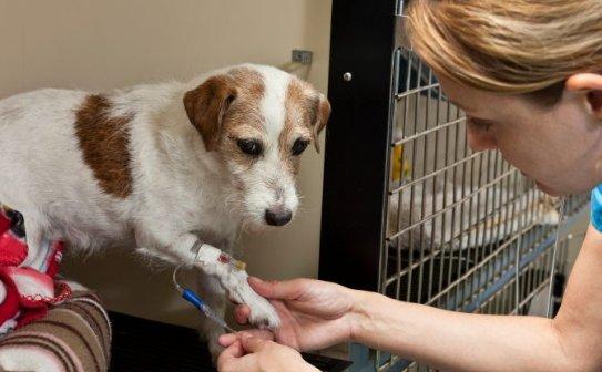 how many parvo vaccines do puppies need