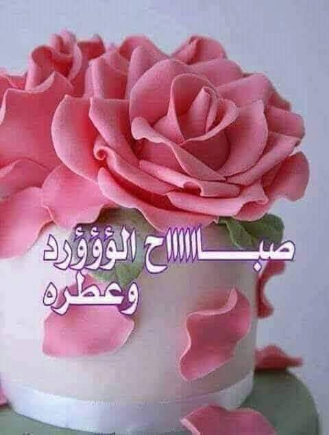 صباح الورد والياسمين صباح 4