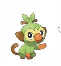 What Type Do Think Grookey Evolution Will Be Pokemon Amino Grookey location in pokemon sword & shield: what type do think grookey evolution will be pokemon amino