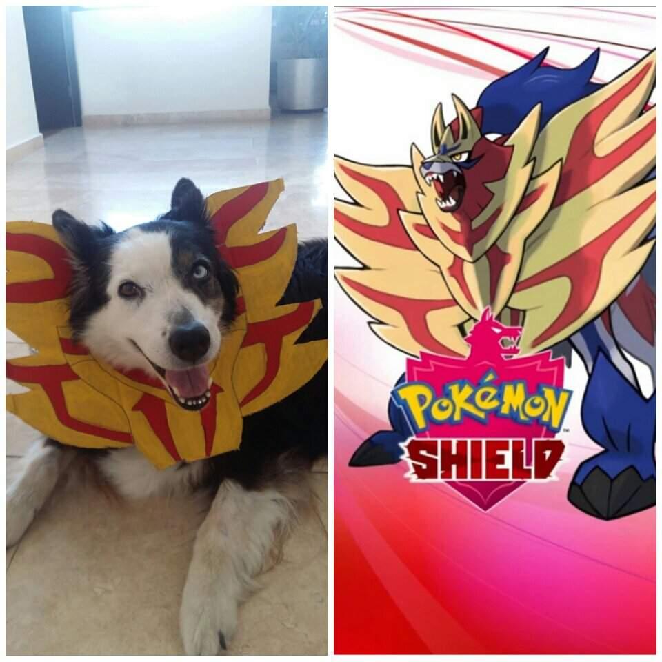 So I Turned My Doggo Into Zamazenta Pokemon Sword And Shield