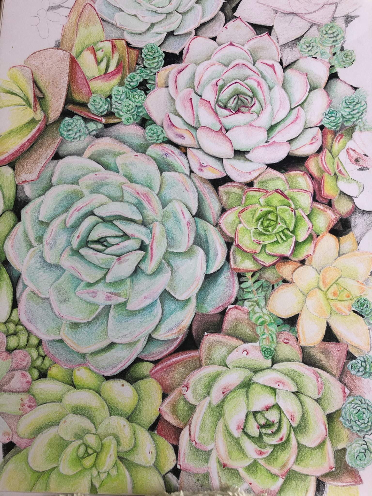 Succulent Coloured Pencil Drawing Art Amino