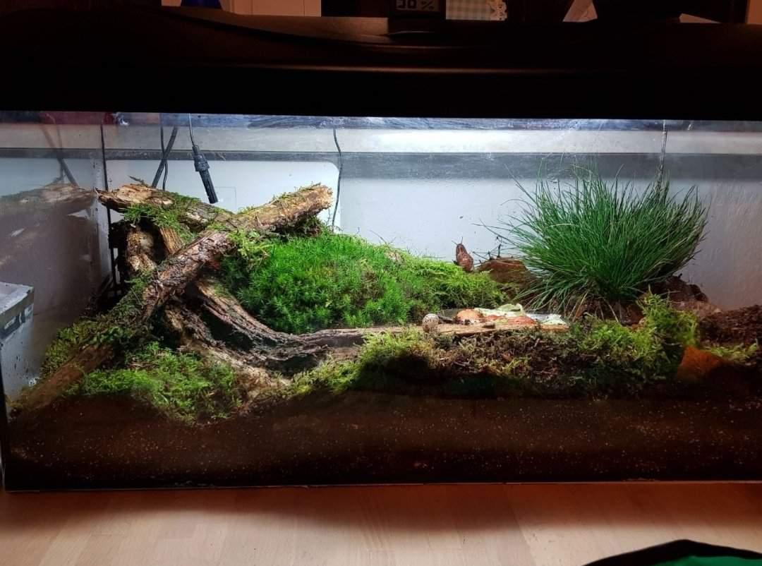 Garden Snail Care Wiki Reptiles Amino