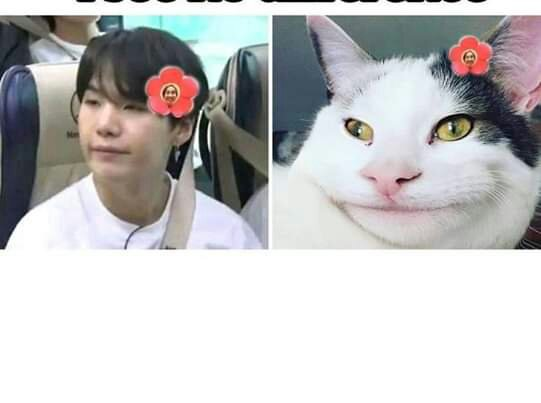 Proofs That Min Yoongi Is A Cat Army Memes Amino