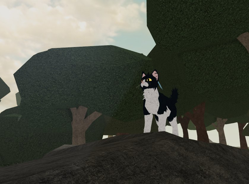 My Own Warrior Cats Game Ultimate Edition Warriors Amino