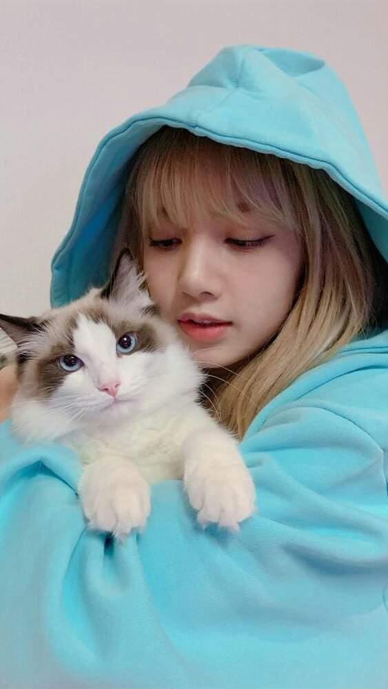 Resultado de imagen para lisa con gatos