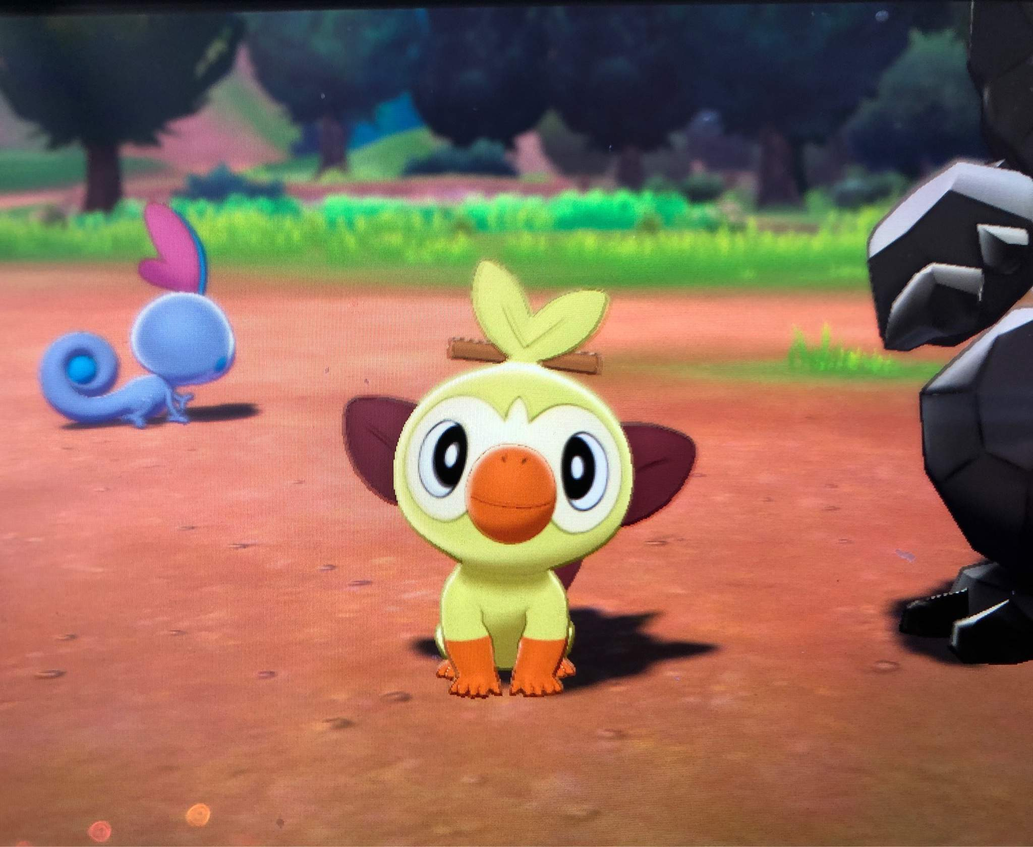 Shiny Grookey 143 Eggs Pokemon Sword And Shield Amino Well you're in luck, because here they come. amino apps