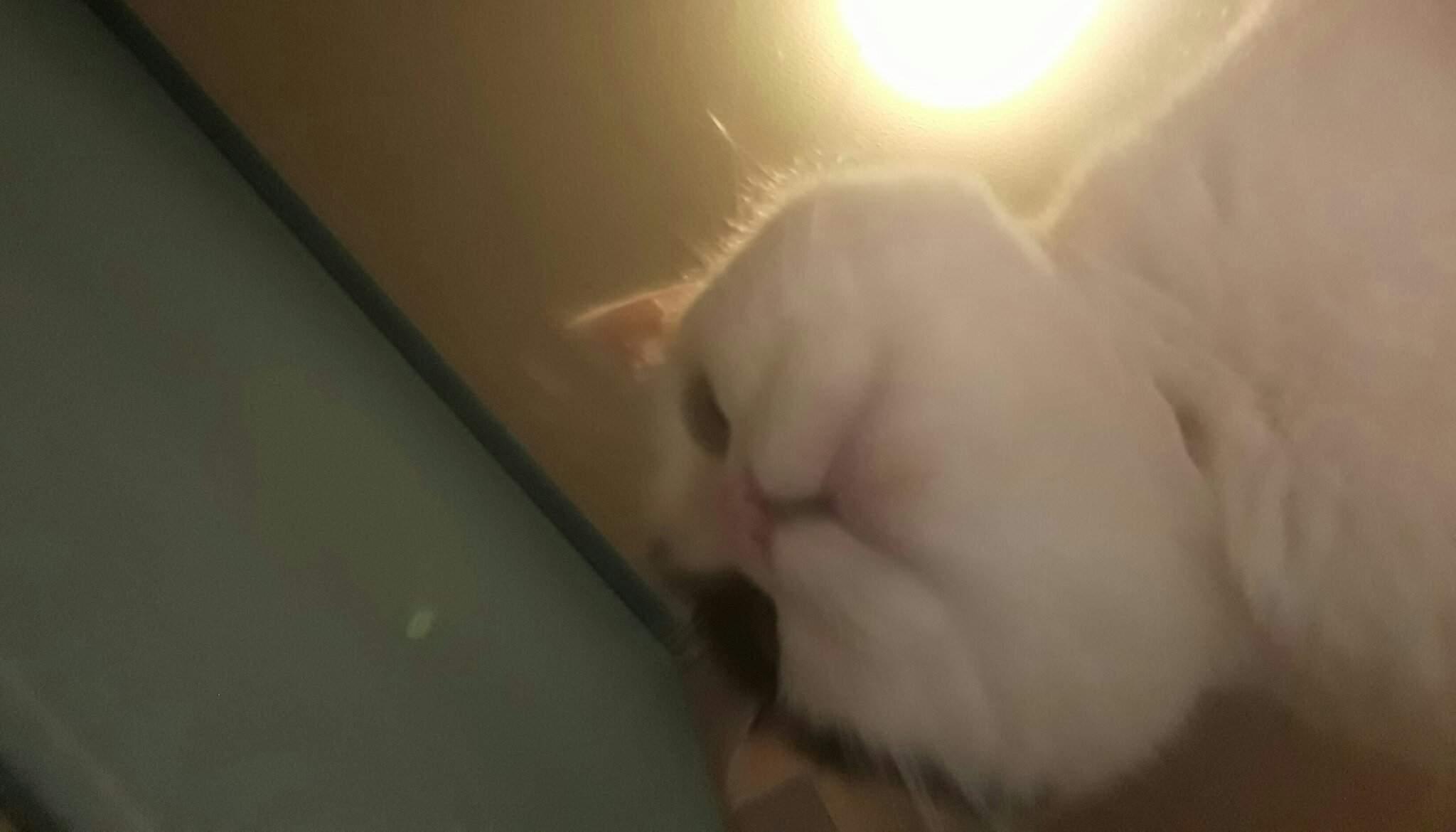 The Facetime Hamster Meme But Worse Dank Memes Amino
