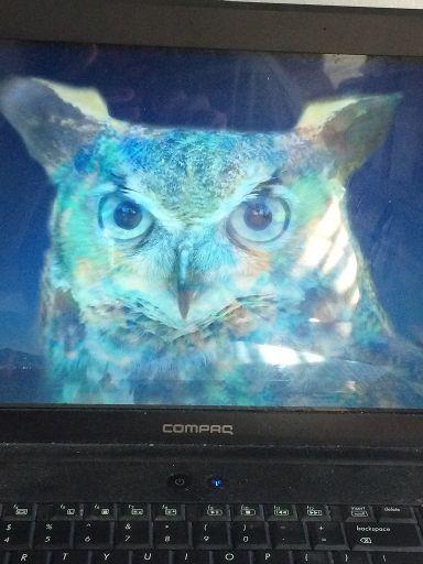 The Opal Night Owl | Art Amino