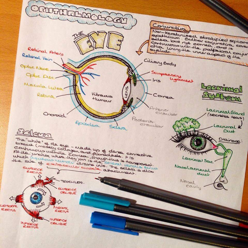 how to study for human biology