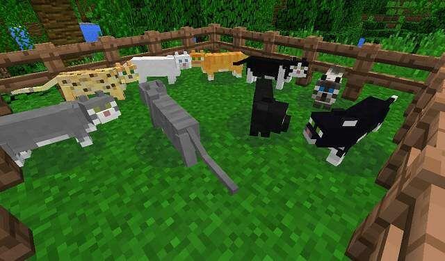OCELOTS MODS!!!! | Minecraft Amino