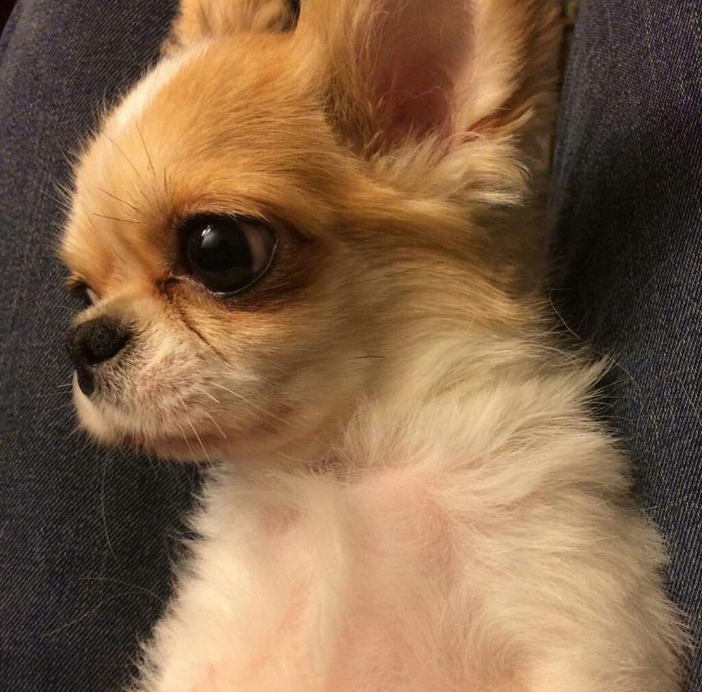 Amber's Puppy Gongju Passes Away! | K-Pop Amino