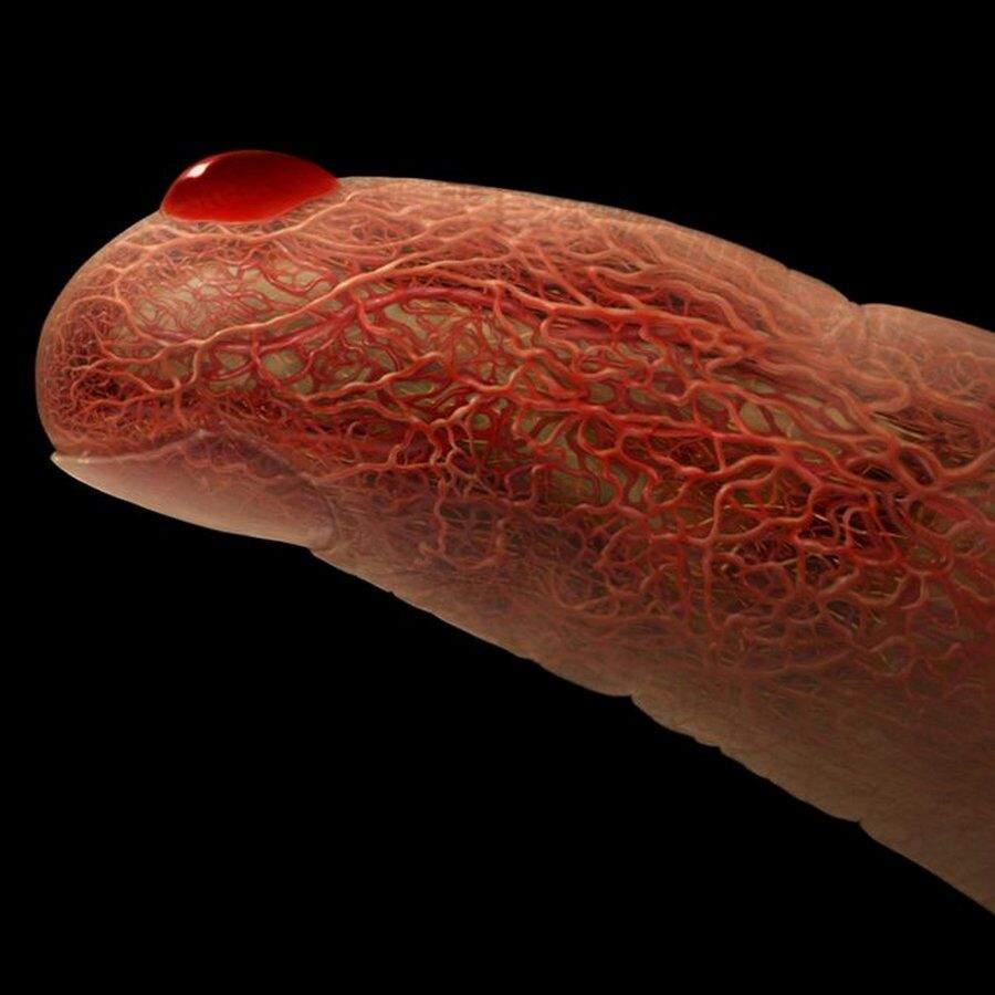 A Look Inside The Human Body Sherlock Amino