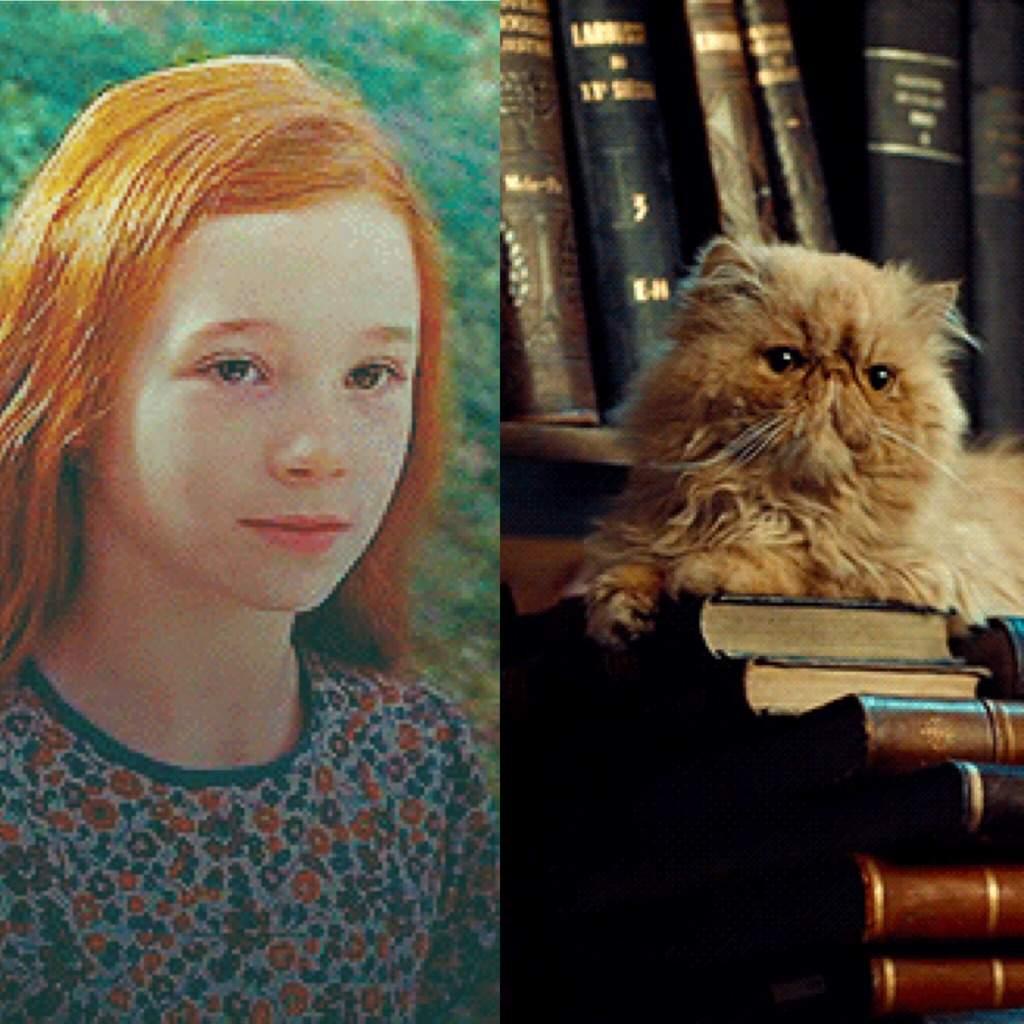 Crookshanks is Lily Potter Theory 🐈🙎🏼 | Harry Potter Amino