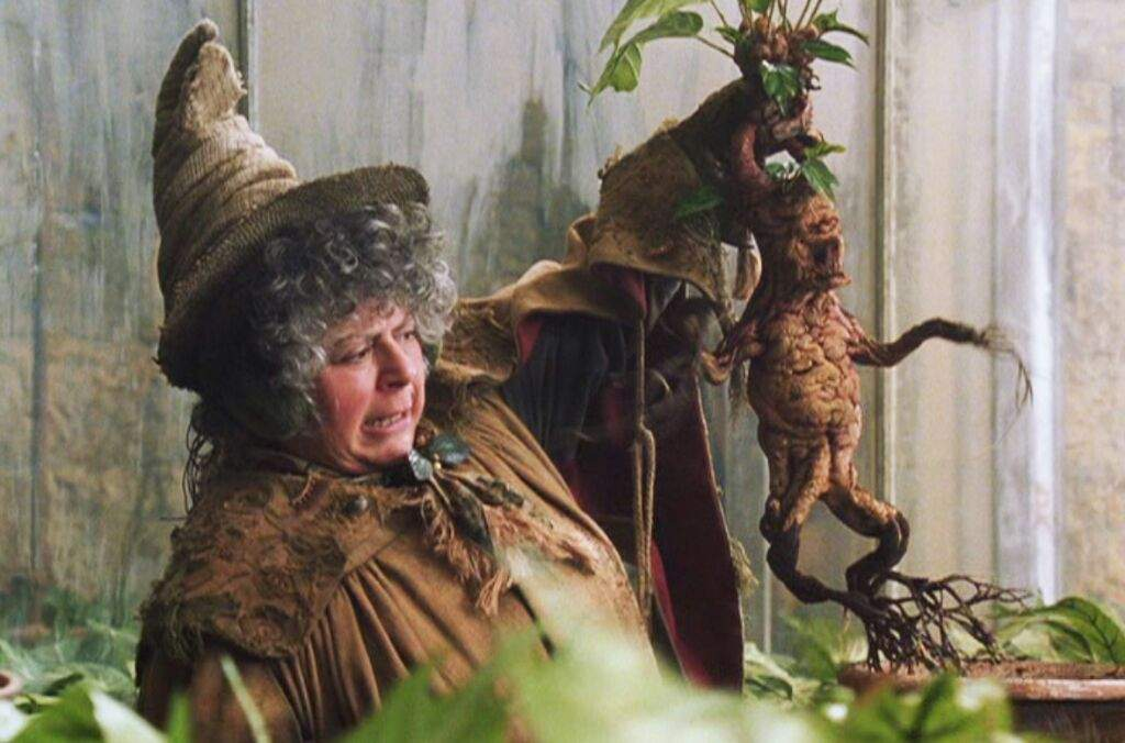 Herbology Lesson Mandrakes Harry Potter Amino