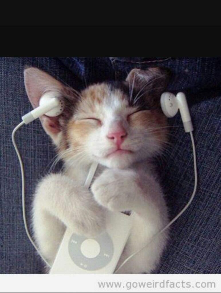 Can Cats Hear Better Than Humans