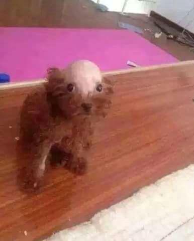 perro de Anna Gabriel