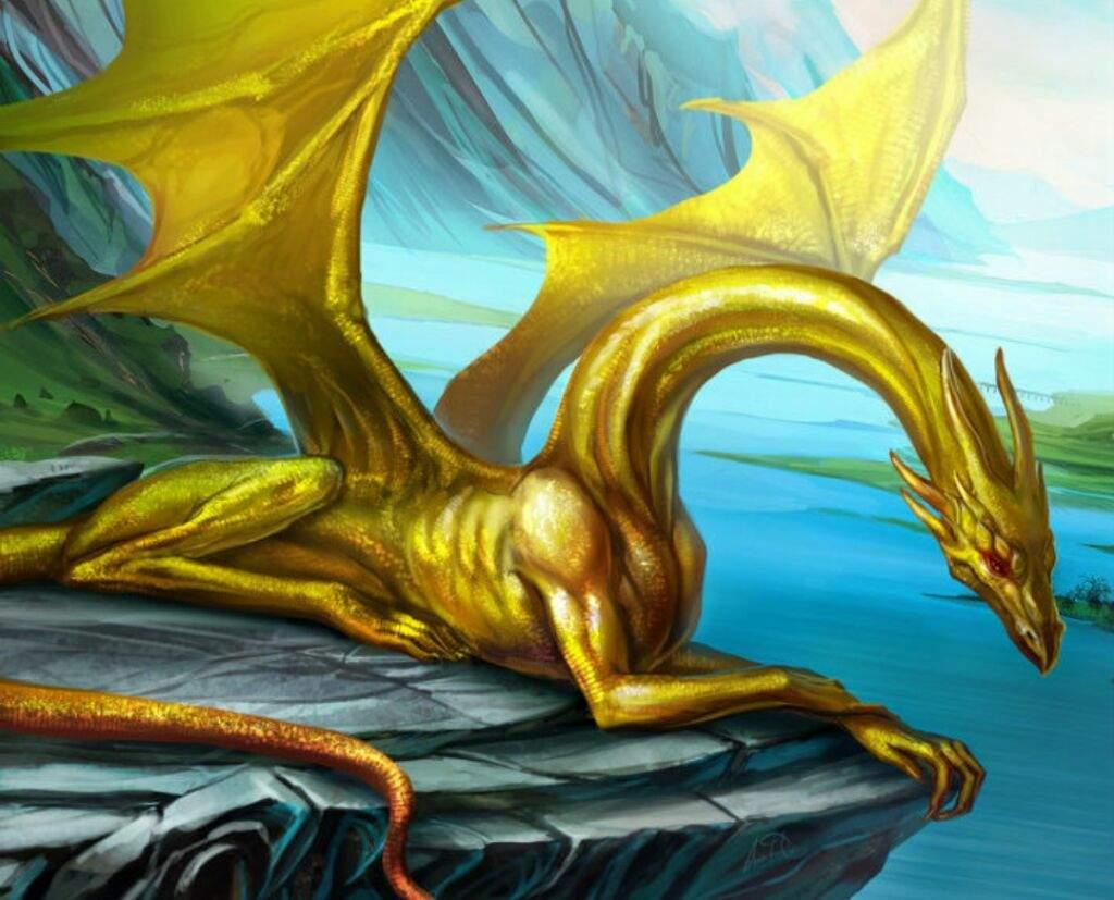 Dragon Species | Wiki | Virtual Space Amino