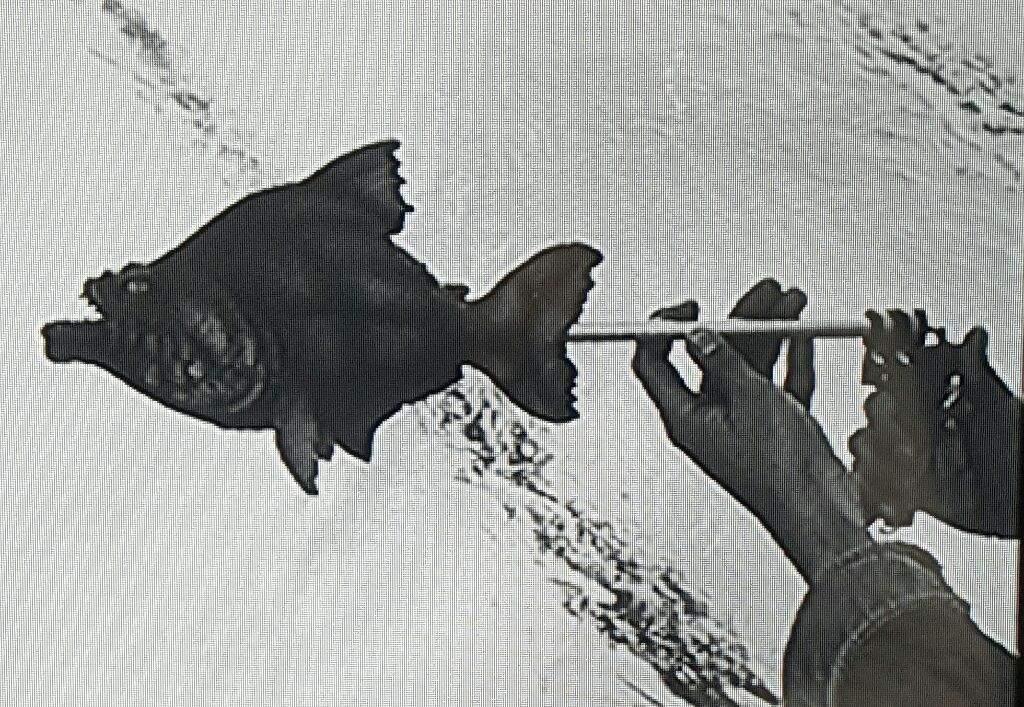 Silvershamrock S 125 Horrifying Films 83 Piranha 1978 Horror