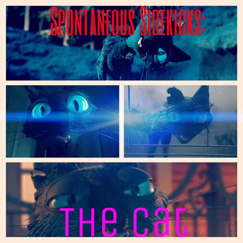 The Cat: Coraline