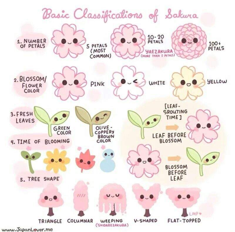 Japan Facts #32: Types Of Cherry Blossoms