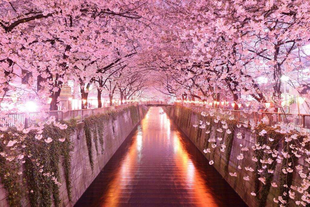 Friday blog10 flowers and their japanese meanings anime amino sakura is the japanese national flower the japanese enjoy sakura in ohanami which is the cherry blossoms festival in spring time mightylinksfo