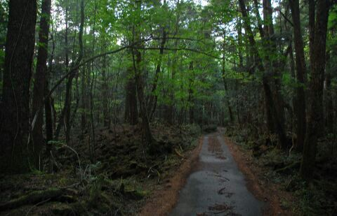 Anyone Heard of the Aokigahara Forest? | Paranormal Amino