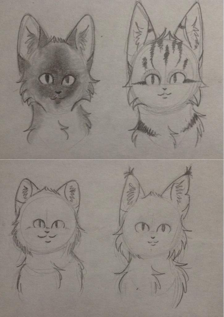 how to draw a feathertail warrior cat step by step