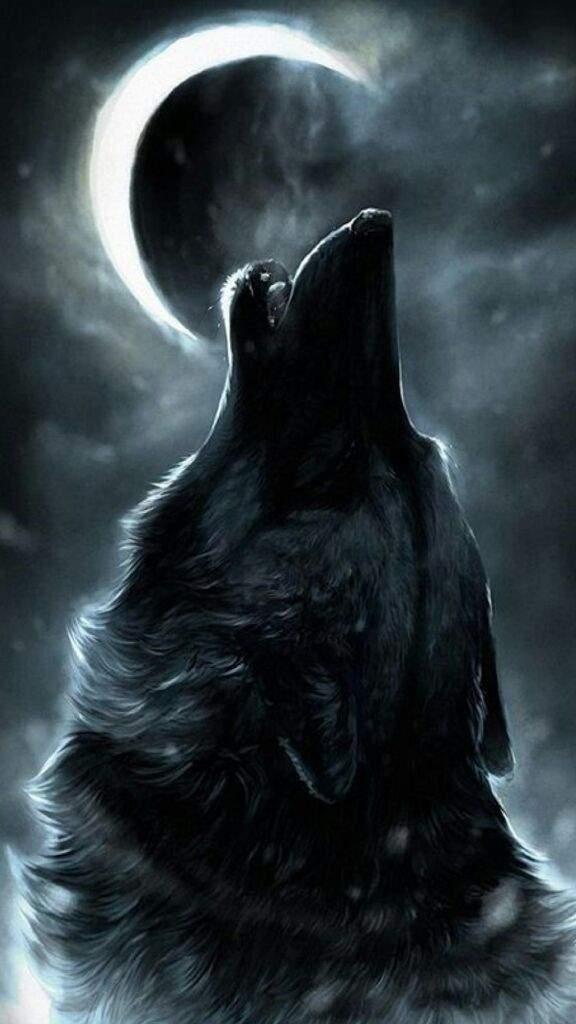 alpha wolf anime amino