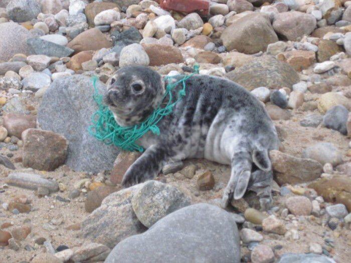 Long Beach Marine Animal Rescue