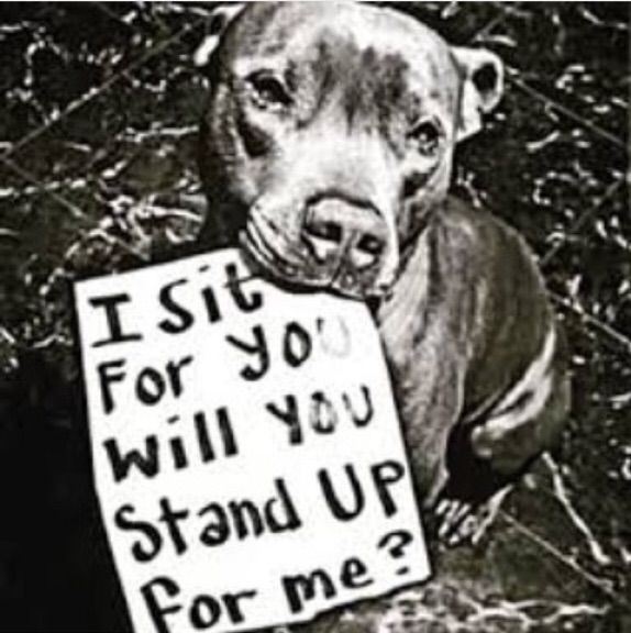 Quote Of All Time Animal Abuse Amino Impressive Animal Abuse Quotes