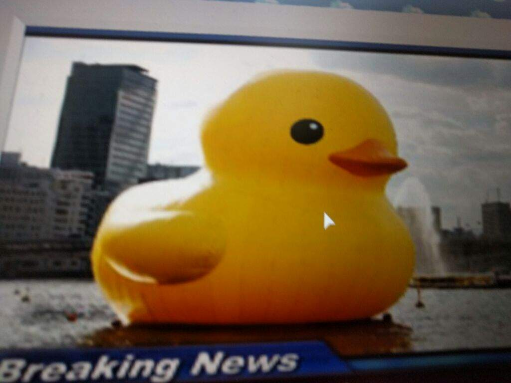 Images Of Roblox Duck