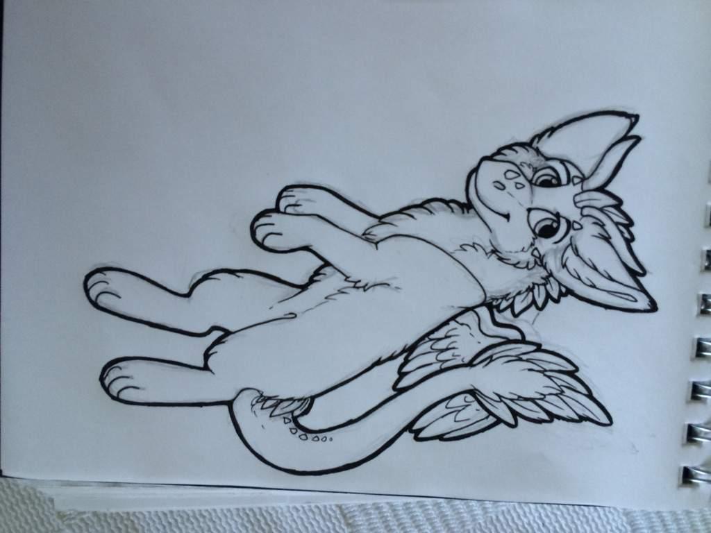Dutch Angel Dragon Anatomy Furry Amino