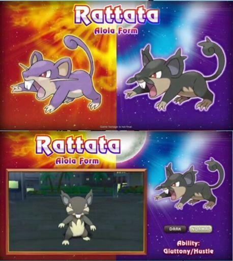 Alola form rattata ,quem gostou? | Pokémon Amino