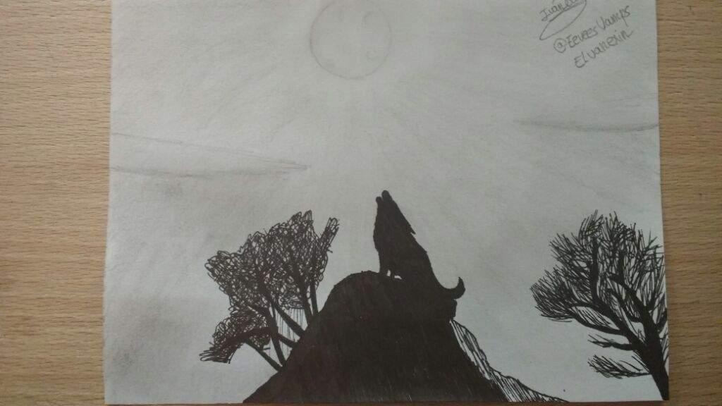Dibujo Lobo Aullando blanco y negro  Anime Amino