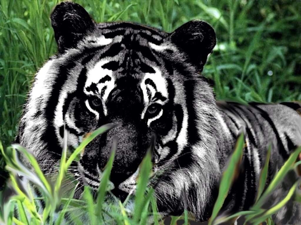 Tigre Wiki Furry Portugues Amino