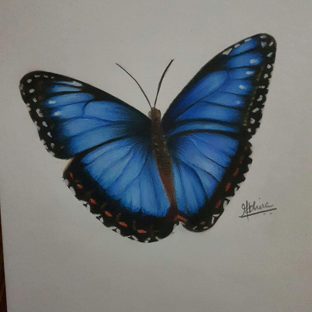 Drawing a realistic butterfly