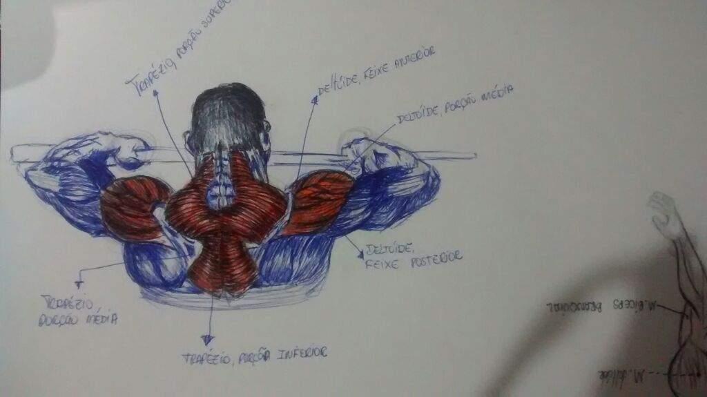 Excepcional La Anatomía Del Motivo Modelo - Imágenes de Anatomía ...